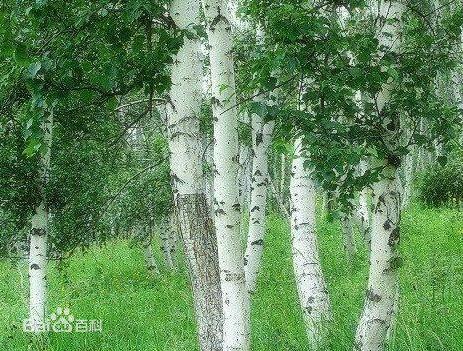 树 素材 顶视
